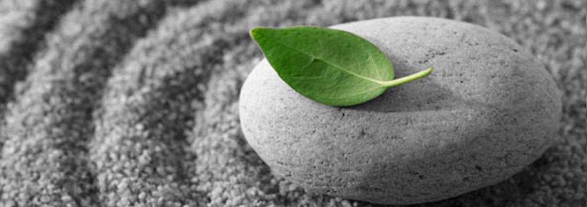 Mindfulness rivas